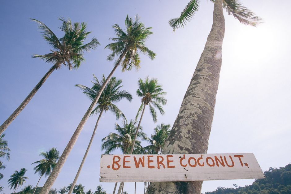 Reisesicherheit für Backpacker in Thailand - Palmen mit Hinweisschild Beware Coconut